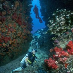 diving-in-the-seychelles